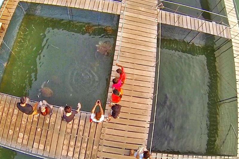แหลมสิงห์ แนชเชอรัลบีช รีสอร์ท จันทบุรี: สถานแสดงพันธุ์สัตว์น้ำเฉลิมพระเกียรติ 6 รอบ พระชนมพรรษา